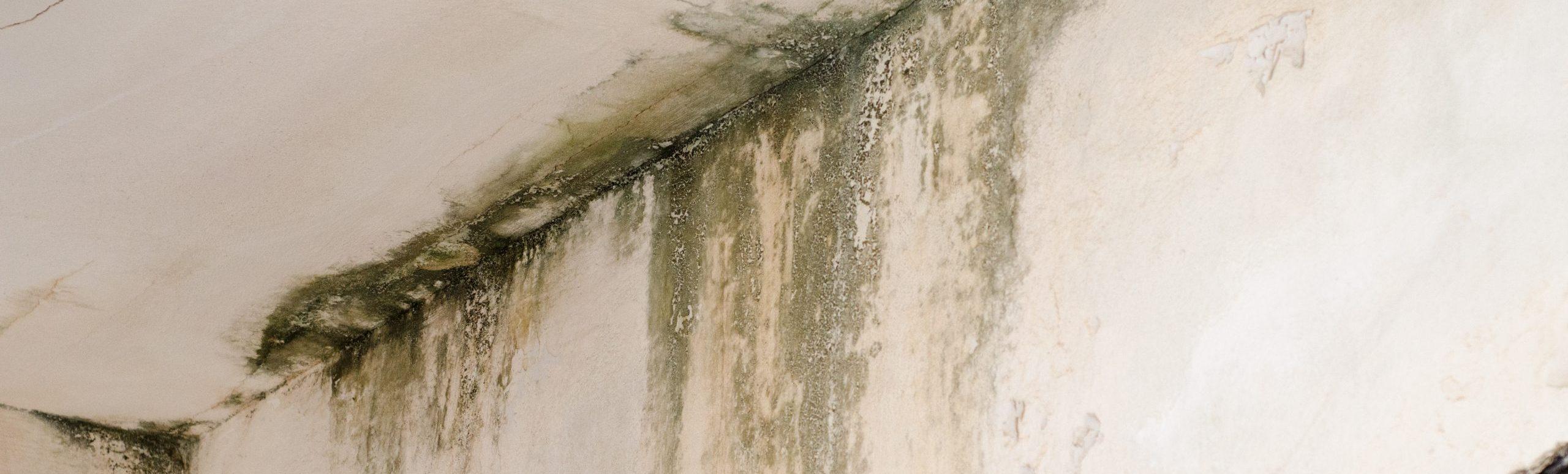 Eine häufige Ursache für Feuchtigkeitsbildung im Keller ist die Kondensation.